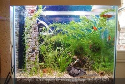 Светодиодное освещение аквариума - 08.jpg