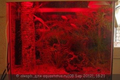 Светодиодное освещение аквариума - 09.jpg