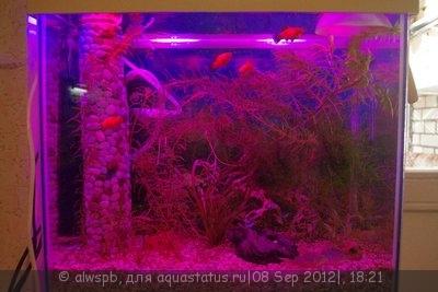 Светодиодное освещение аквариума - 13.jpg