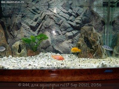 Мой новый аквариум Jebo 250 литров R44  - Изображение 005.jpg