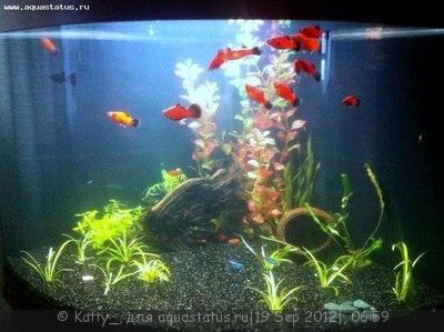 Мой аквариум-проба 95 литров Katty_  - IMG_1964[1]-1.jpg