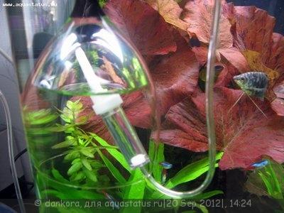 Самый простой источник СО2 в аквариуме - IMG_2774.JPG