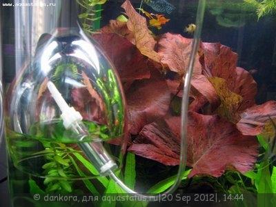 Самый простой источник СО2 в аквариуме - IMG_2775.JPG
