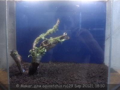 Наклеивание пленки на стекло аквариума - DSC00559.JPG