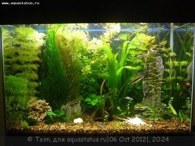 Мой первый аквариум 150 литров Tsim  - 123.jpg