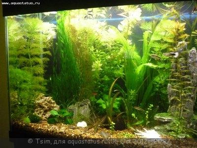 Мой первый аквариум 150 литров Tsim  - P1040327.JPG