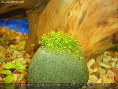 Аквариумные растения - опознание растений. - опознание растения.jpg