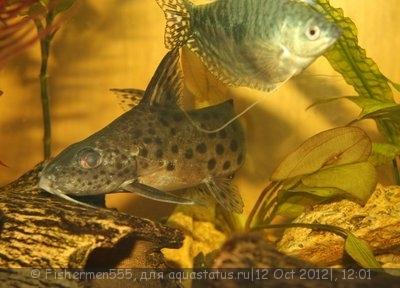 Помогите опознать рыбку опознание рыб  - 5.jpg