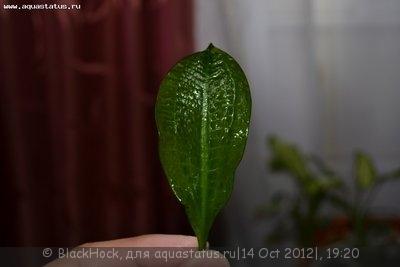 Аквариумные растения - опознание растений. - DSC_1229.JPG