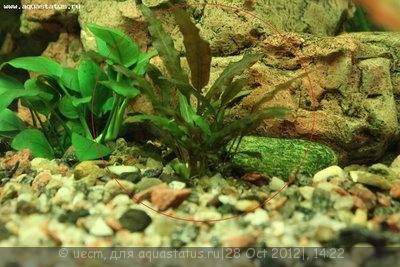Опознание аквариумных растений - IMG_1335.JPG