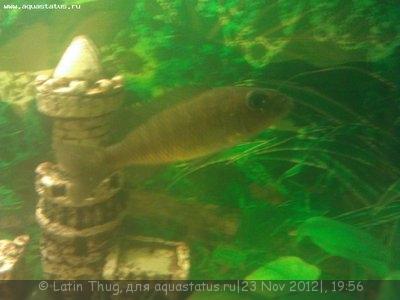 Помогите опознать рыбку опознание рыб  - WP_000164.jpg