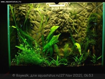Аквариум - узкий травник 70 литров Roywalk  - Аква1.jpg