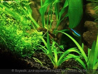 Аквариум - узкий травник 70 литров Roywalk  - Аква2.jpg