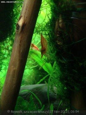 Аквариум - узкий травник 70 литров Roywalk  - Аква3.jpg