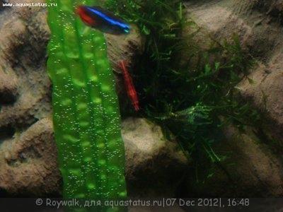 Аквариум - узкий травник 70 литров Roywalk  - 8.jpg