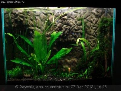 Аквариум - узкий травник 70 литров Roywalk  - 9.jpg