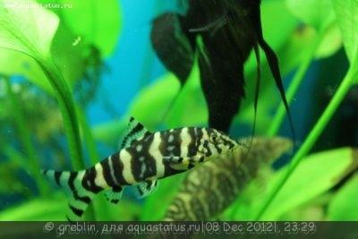 Помогите опознать рыбку опознание рыб  - IMG_4173[1].jpg