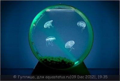 Ну так как-то с медузенями. - 1338540609_akvariumy-8.jpg