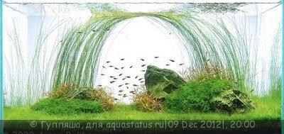 Интересные аквариумы со всего мира - article_image-image-article.jpg