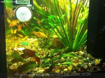 Опознание аквариумных растений - фотография2312127.JPG