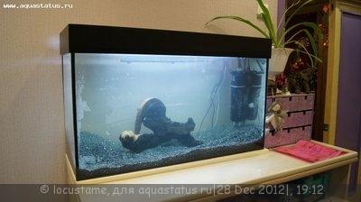 Аквариум 100 литров Locustame  - _DSC5834.JPG