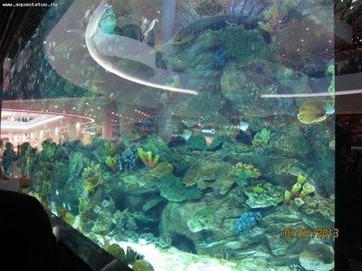 Интересные аквариумы со всего мира - IMG_2216.JPG