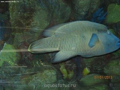 Интересные аквариумы со всего мира - IMG_2224.JPG