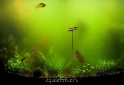 Цветение воды - z1.jpg