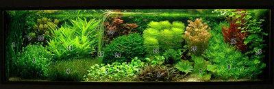 Аквариумные растения - опознание растений. - DutchStyle_PlantedAquarium1.jpg
