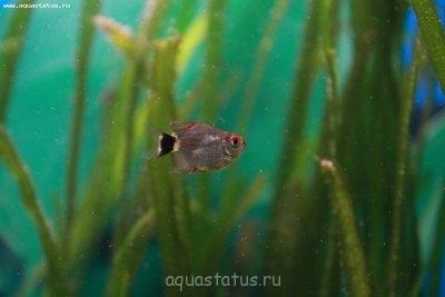 Помогите опознать рыбку опознание рыб  - DPP_0001.JPG