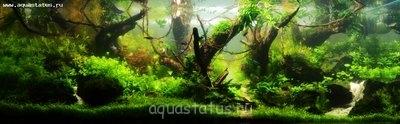 Консультации по различным вопросам в направлении акваскейпа от Acrobat - user20545_pic125356_1354829021.jpg