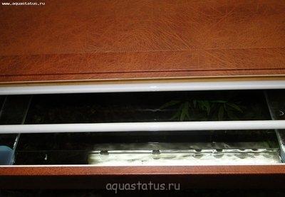 Как увеличить свет в аквариуме, инструкция в картинках. - DSC09862.JPG