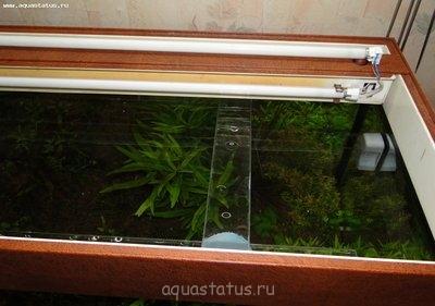 Как увеличить свет в аквариуме, инструкция в картинках. - DSC09857.JPG