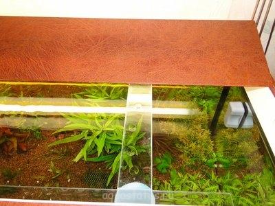 Как увеличить свет в аквариуме, инструкция в картинках. - DSC09858.JPG
