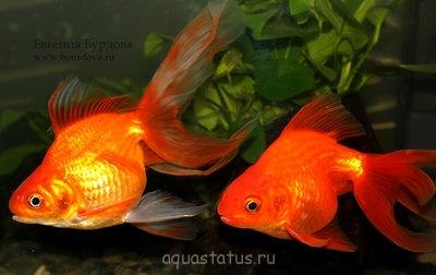 обе рыбки - в-IMG_0177.jpg