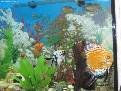 Светодиодное освещение для пресного аквариума своими руками - IMG_0519.JPG