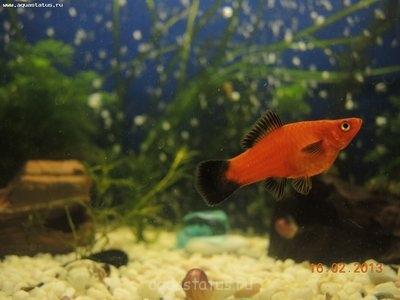 Помогите опознать рыбку опознание рыб  - DSCN8601.JPG
