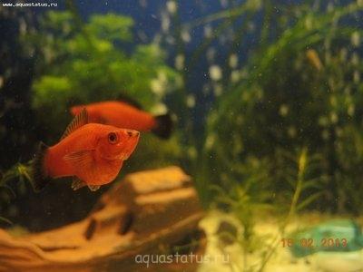 Помогите опознать рыбку опознание рыб  - DSCN8607.JPG