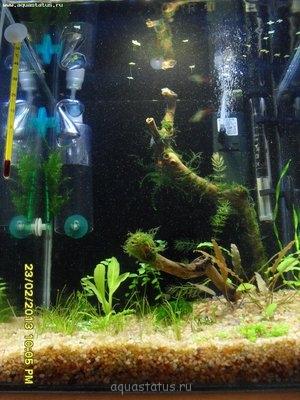Нано аквариум 30 литров da  - SDC10896.JPG