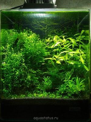 Светодиодное освещение аквариума - P1080763.jpg