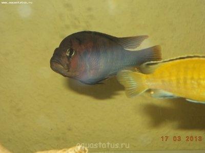 Помогите опознать рыбку опознание рыб  - DSC00783.JPG