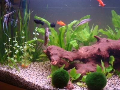 Мой аквариум 180 литров Ирина  - Lang 341.jpg