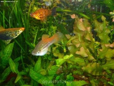 Помогите опознать рыбку опознание рыб  - P1000295.JPG