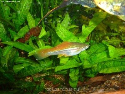 Помогите опознать рыбку опознание рыб  - P1000299.JPG