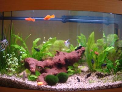 Мой аквариум 180 литров Ирина  - Lang 364.jpg
