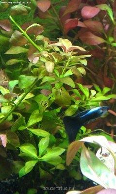 Опознание аквариумных растений - IMAG0136.jpg