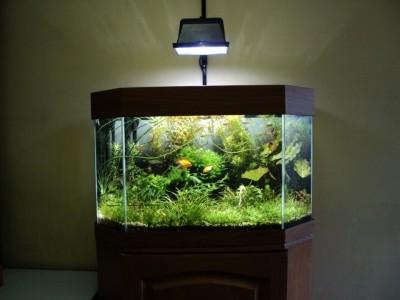 Мои аквариумы Алексей7  - Копия DSC00084.JPG