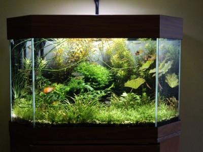 Мои аквариумы Алексей7  - Копия DSC00088.JPG