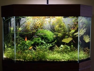 Мои аквариумы Алексей7  - Копия DSC00086.JPG