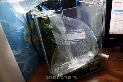 Мой аквариум-лягушатник 30 литров dankora  - DSC00594.JPG